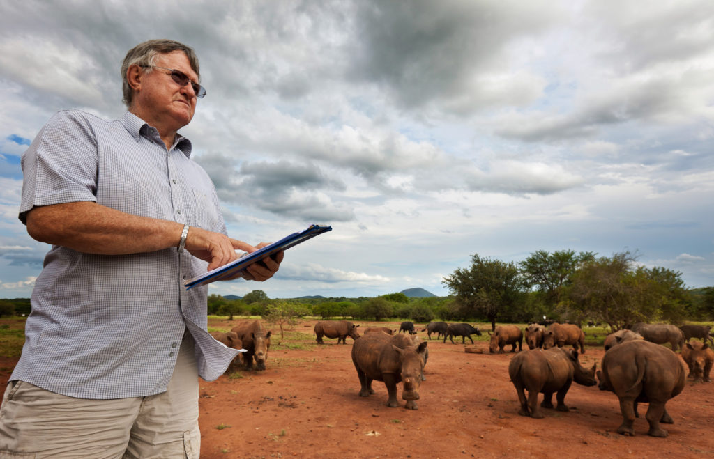"NELSPRUIT, NORTH EAST SOUTH AFRICA, MARCH 2011: The world's largest White Rhino breeder, John Hume, 69, looks out at a few of his 500 plus White Rhino as they come in from grazing on his 6500 Hectare ranch for a daily snack of lucerne mixed with game pellets, Nelspruit, South Africa, March 19 2011. A self made multi-millionaire, Hume is a controversial character in the conservation world. He advocates a sustainable consumption of rhino horn as a renewable resource as a method to combat the plague of poaching which killed 333 rhino in South Africa in 2010, the highest ever figures and the fastest acceleration of the killing of these unique animals in history. John Hume is adament in his believes that the insatiable Asian demand for Rhino horn and the subsequent illegal slaughter can only be curbed by a sustained, humane harvesting of horn from Rhino kept on large grazing farms by professional farmers for the purposes of commercial conservation. This brings him into direct conflict with much of the conservation world, despite the recent wide-spread popularity of darting and de-horning Rhino across much of South Africa as an anti-poaching deterrent. The rise of the Asian middle class, in particular China and Vietnam, combined with recent clampdowns on permits for legal Rhino hunting, has seen the price of Rhino horn sky-rocket to a level comparable with gold. John Hume has stated that he has well over $25 million worth of Rhino horn which is legally permitted and locked away in bank vaults across South Africa, waiting for a day when he hopes it will be legal to trade. In essence Hume is like a futures trader, gambling millions on the acquisition of White Rhino which he states is both a compassionate gesture and also a great business investment if the law-makers in the conservation world ""could only see sense."" Hume believes the Rhino has the resources through which to save itself from the threat of extinction. A fully grown horn can be harvested every 3 years with min"
